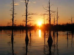 black-bayou-monroe-louisiana-united-states-of-america-17785121-2560-1920
