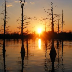 black-bayou-monroe-louisiana-united-states-of-america-17785121-2560-1920