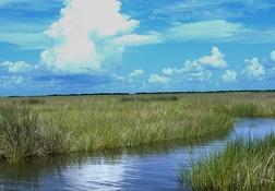 wetlands_3451