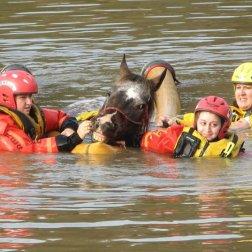 Louisiana State Animal Response Team - LSART. Louisiana Floods